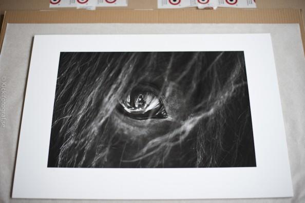 http://www.kickifotograf.se/